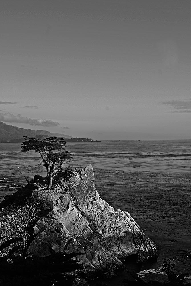 17-Mile-Drive-The-Lone-Cypress045